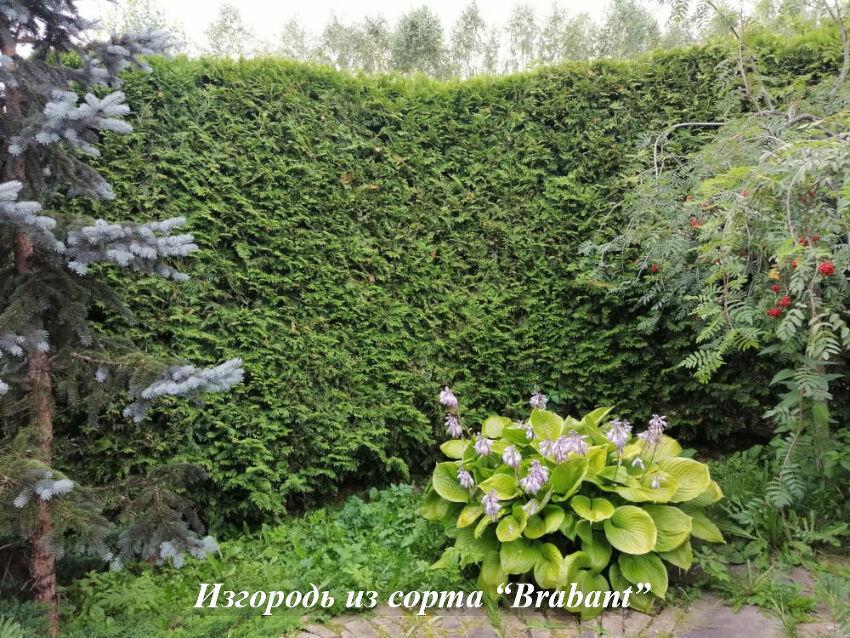 Brabant_izgorod'