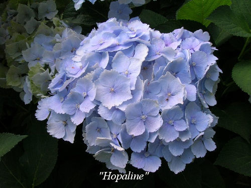 Hopaline
