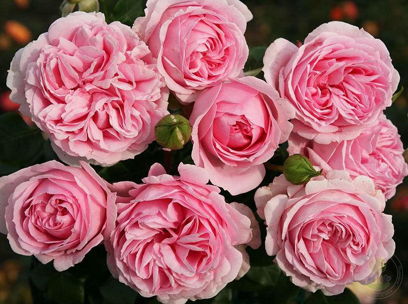 Интернет магазин подворье розы