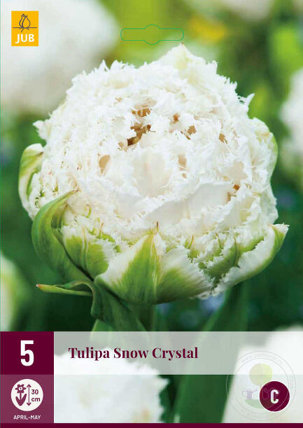 Тюльпан Сноу Кристал (Tulipa Snow Crystal)